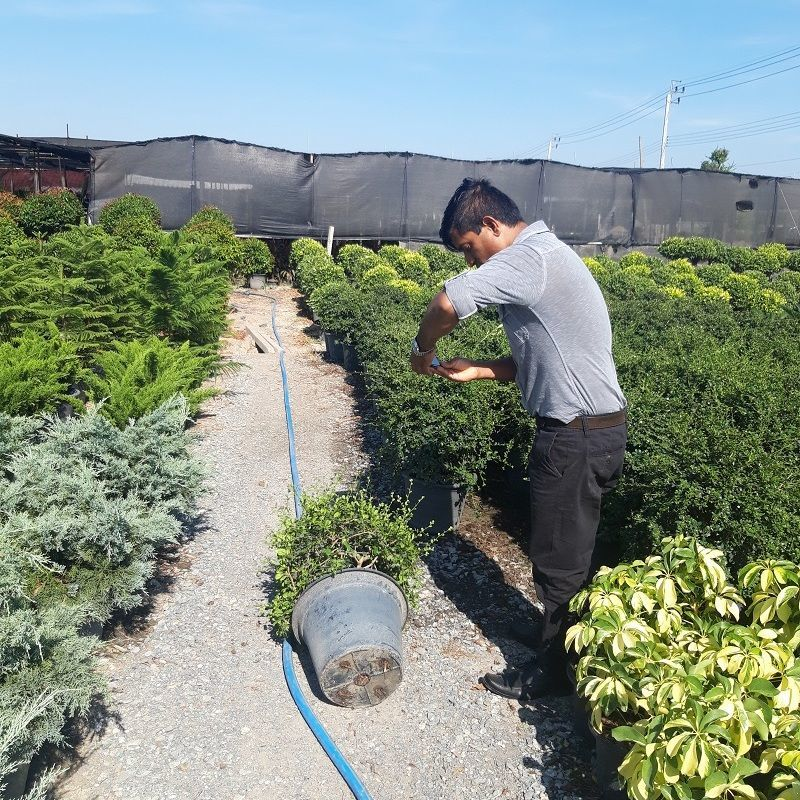 The client from dubai to select the plants