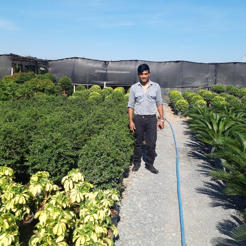 project the garden manager from qatar visit nusery garden